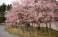 Matsushima (2455292341).jpg