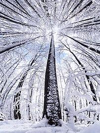 Medvednica forest.jpg