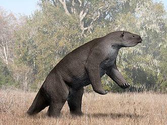 Megatherium - M. americanum