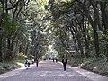 Meiji-jingu Wald 1.jpg
