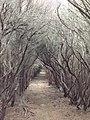 Melaleuca forest, Nadgee Wilderness, Victoria.jpg