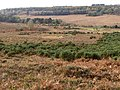 Millersford Bottom from Gravel Pit Hill, New Forest - geograph.org.uk - 277079.jpg