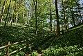 Millington Wood 2 - panoramio.jpg