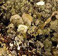 Mimetite-Wulfenite-235242.jpg
