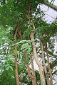 Mimosa & America (1) (11983598996) (2).jpg