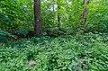 Moers, Lauersforter Wald, Landwehr, 2020-05 CN-01.jpg