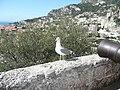 Monaco - panoramio (123).jpg