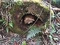 Monga National Park dead tree.jpg