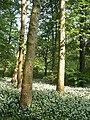 Monza-parco-allium-ursinum.jpg