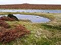 Moorland pool and tumulus - geograph.org.uk - 693977.jpg