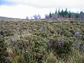 Moorland south of Edinbane - geograph.org.uk - 279317.jpg