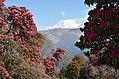 Mount Dhaulagiri Ghorepaani 4.jpg