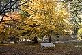 Mount Wilson garden - panoramio - Maksym Kozlenko (1).jpg