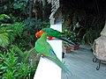 Mr ^ Mrs King Parrot - panoramio.jpg