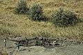 "Mud volcano on the cape of ""Pekla"".jpg"