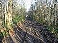 Muddy track in Pitt Wood - geograph.org.uk - 1100365.jpg