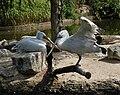 Muenster-100720-15825-Zoo.jpg