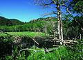 NRCSCO01034 - Colorado (1455)(NRCS Photo Gallery).jpg