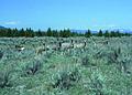NRCSMT01081 - Montana (5009)(NRCS Photo Gallery).jpg
