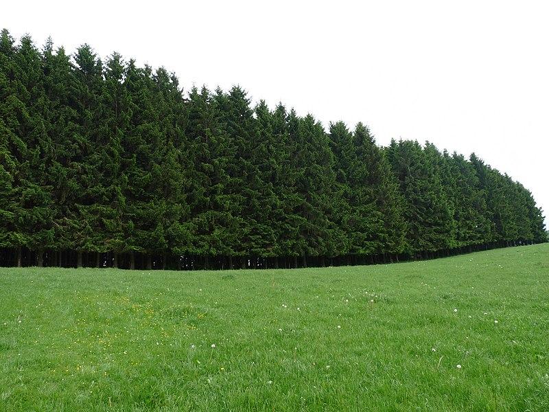 A forest near Châtillon, Belgium