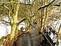 Naden Brook - geograph.org.uk - 1659974.jpg