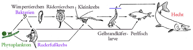Nahrungskette – Wikipedia
