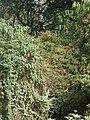 Nairobi Arboretum Park 12.JPG