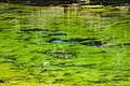 Naltar Lake 001.jpg