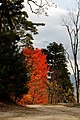 Nariai-ji Temple8 - KimonBerlin.jpg