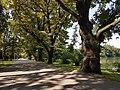 Naturdenkmal Eichenreihe am Südufer des kleinen Dutzendteiches, parallel zum Alfred-Hensel-Weg 20170825 132205.jpg