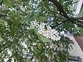 Nature in Smolensk - 55.jpg