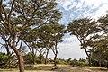 Nature of Ngorongoro Conservation Area (189).jpg