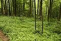 Nature reserve Žižkův vrch in summer 2012 (17).JPG