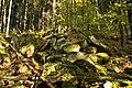 Nature reserve Ptaci stena in autumn 2011 (6).JPG