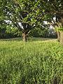 NaturschutzLassee20140524 194030.jpg
