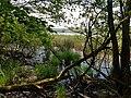 Naturschutzgebiet Craimoosweiher 05.jpg