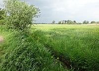 Naturschutzgebiet Hetter-Millinger Bruch PM18-03.jpg