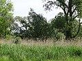 Naturschutzgebiet Heuckenlock 21.05.2014 14.JPG