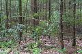 Naturschutzgebiet Rehburger Moor IMG 3192.jpg