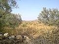 Navidhand new 357 - panoramio.jpg