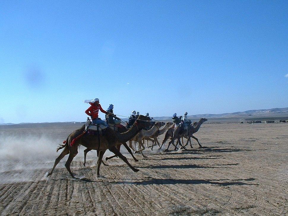 Negev Camel Race