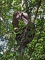 Niño de térmites - Quintana Roo - México.jpg