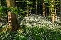Nordkirchen, Naturschutzgebiet Ichterloh -- 2018 -- 2321.jpg