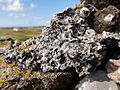 North Uist Fae060.jpg