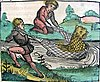 Nuremberg chronicles - Bottom of Page CCXVIIv—Lion-Cat Fish.jpg