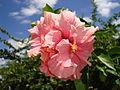 O rosa da natureza.jpg