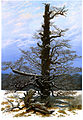 Oak Tree in the Snow.jpg