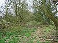 Old Field Boundaries near Mark Cross - geograph.org.uk - 152385.jpg