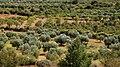 Olivar - panoramio.jpg