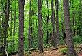 Open Forest (9492417118).jpg